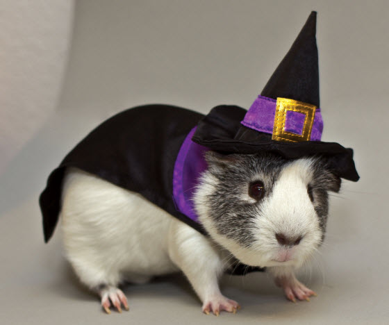 Guinea Pig Witch Costume