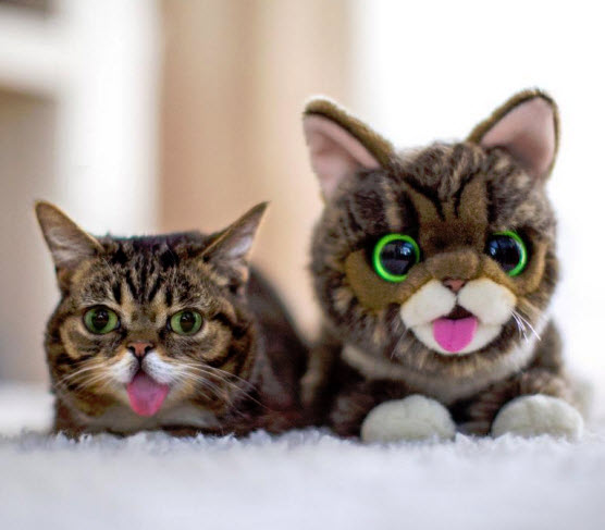 Lil Bub and Lil Bub Plush Toy
